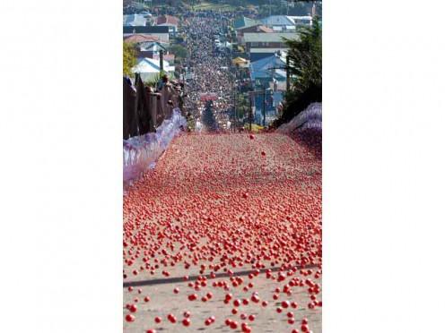 Jaffa Race in Dunedin