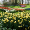 Keukenhof Gardens - pictures of tulips from the world's biggest flower garden