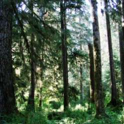 Visit The Hoh Rainforest - Olympic National Park