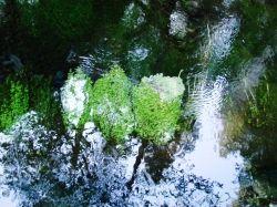 Hoh Rainforest Streams