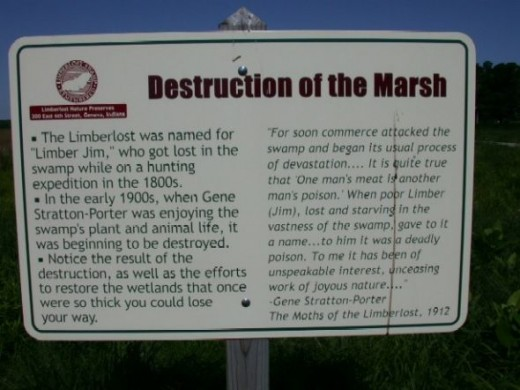 The Destruction of the Limberlost Swamp