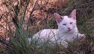 Georgie in Her Natural Habitat