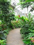 Garfield Park Conservatory and Sunken Gardens