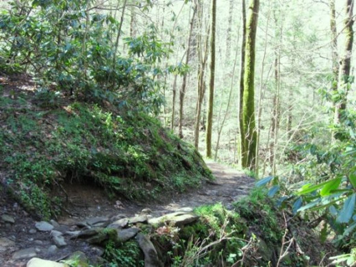 A level portion of the trail in the final 1.5 miles of the hike to the Cascades.