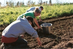 Community Action Grants To Plant A Garden