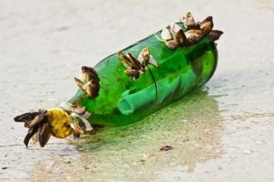 Love Messege in a Bottle