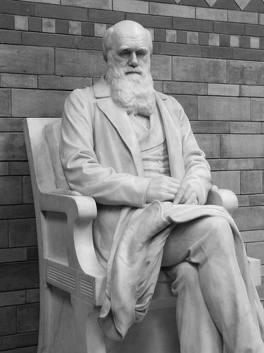 Kensington Darwin Statue Picture by failing_angel