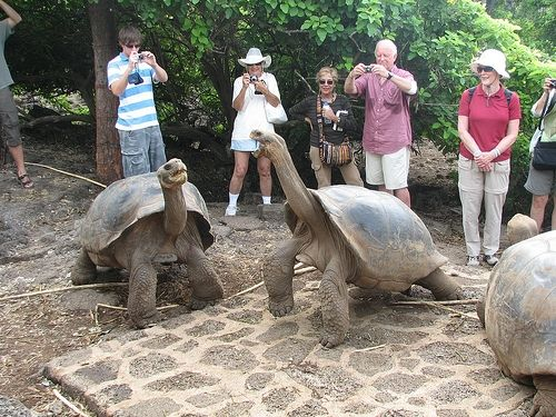 Visiting with Galapagos Tortoises by NH53