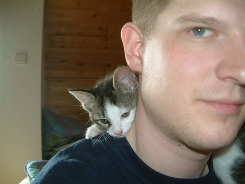 Man and Kitten