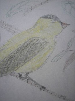 Colored Pencil Sketch Bird Nature Journal