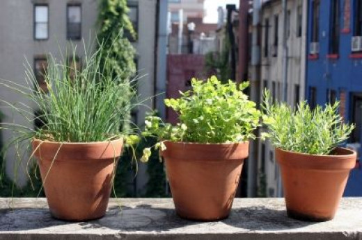 Container Gardening In The City