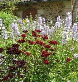 Our gardens at Les Trois Chenes Limousin