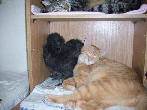 Sweet Tweets and Mendi sleeping together