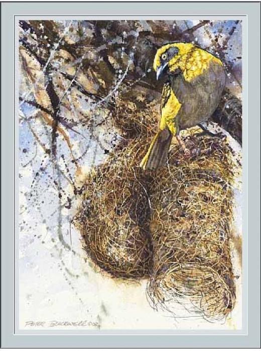 Baglefechts Weaver by Peter Blackwell