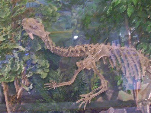 Rare California dinosaur