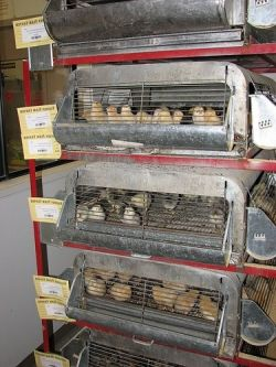 Feed store chicks