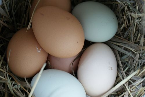 Colored Chicken Eggs by Cortney @ Dog, Farm, Canvas, Quilt Cortney Dean