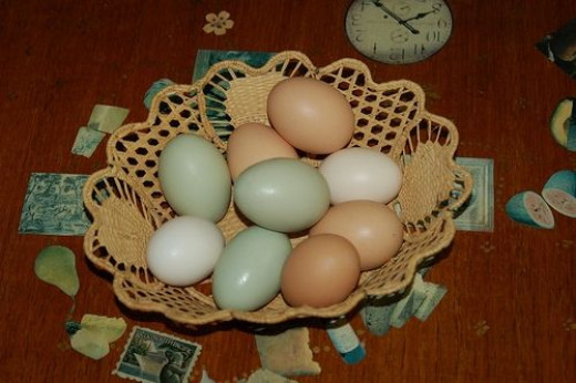 Assorted Colored Chicken Eggs by Jasmine&Roses