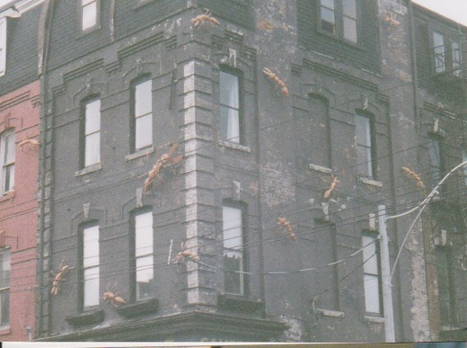Ants on a  Building (I guess they'd be carpenter ants?)  Queen Street I'm sure