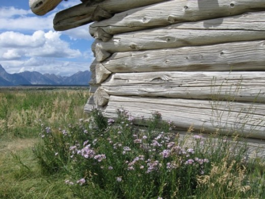 An old homestead with wildflowers