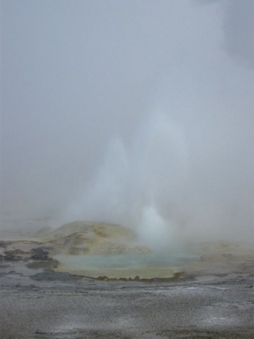 A very foggy morning made viewing the geysers in the Midway Basin area a surreal experience.