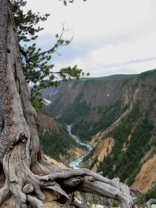 Another view of the canyon and the Yellowstone River.