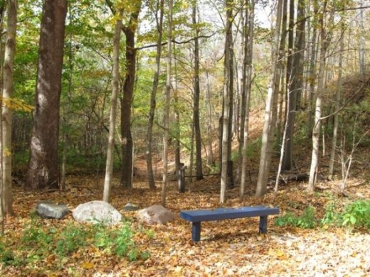A number of benches will be found along the trail.