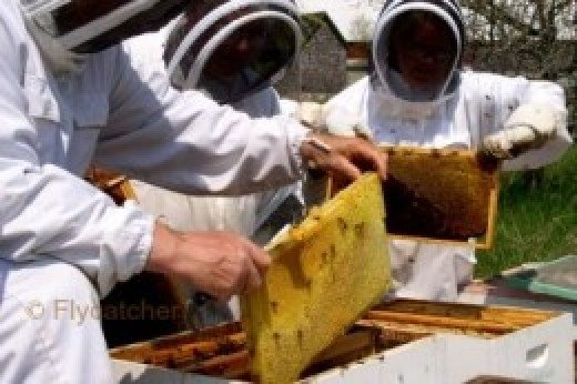 Beekeepers.  Photo by the author.