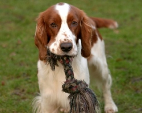Make Your Own Homemade Dog Toys