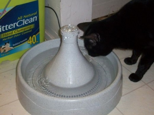 Cat Using Drinkwell 360 Pet Water Fountain