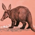 Aardvark: A Wild Animal Love!