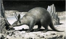 Aardvark  black and white art print