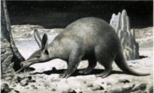 Aardvark  black and white art print
