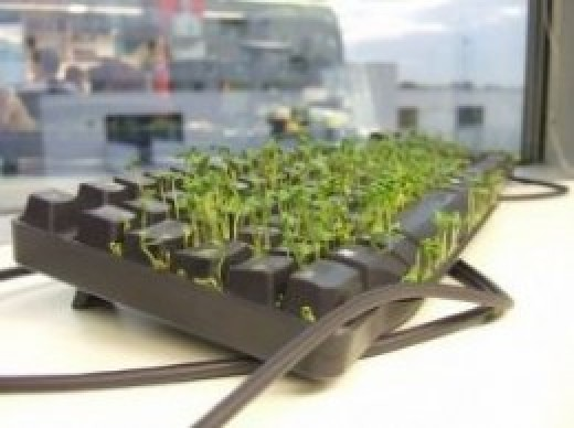 Keyboard and Cress by wetwebwork, on Flickr