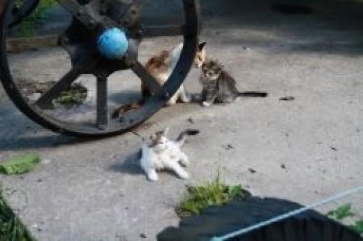 Uglich - cats
