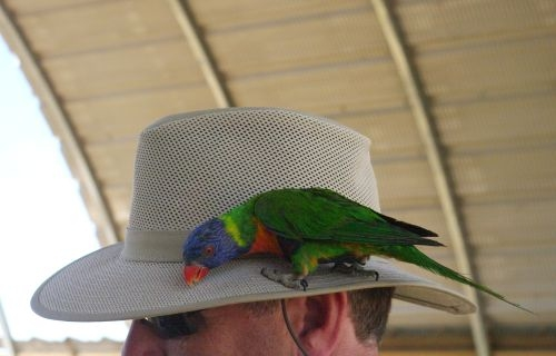 He has an unusual decoration on his hat.