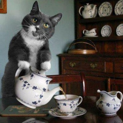 Tea CATtle