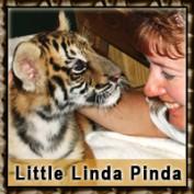 LittleLindaPinda profile image