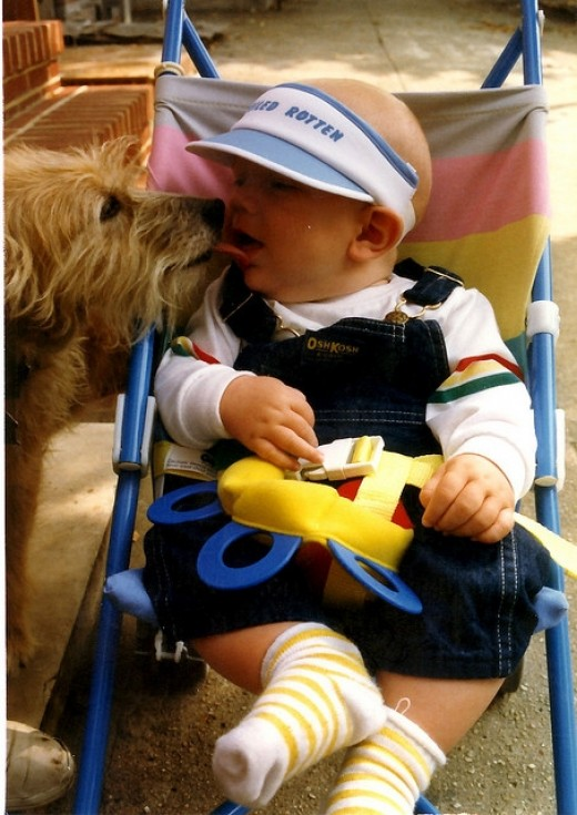 Dog kissing a baby in a stroller