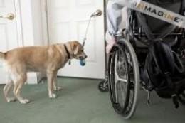 Sunnybank Locksmith Dog opening door