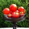 Hanging Tomato Planters