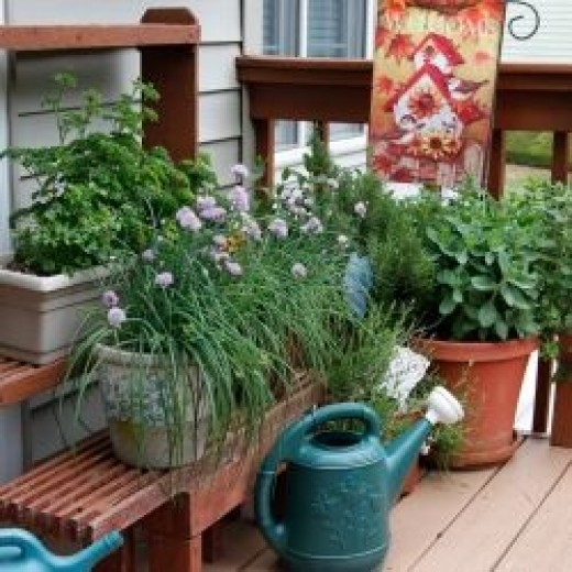 herbs on the deck
