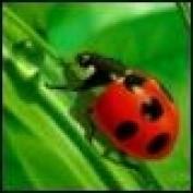 greg2biz2 profile image