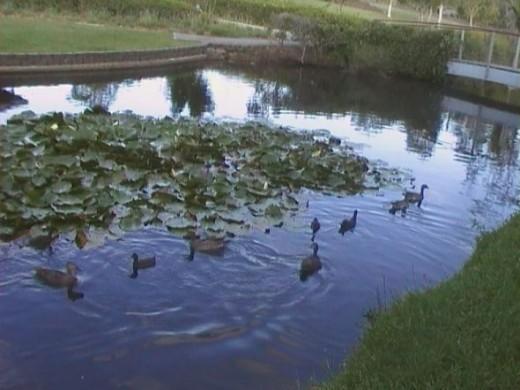 Rochedale Park lake