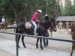 YosemiteValleyStable, stable, mules