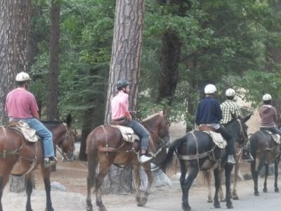 Half day mule rides and 2-hour horseback tours available at stables