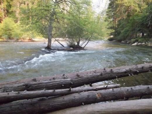 Fallen trees along the Merced River