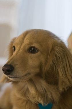Pet Portrait With Canon Rebel T3i