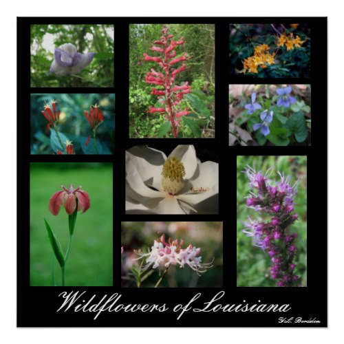 Wildflowers include leather-flower clematis, red buckeye, blue violets, flame azalea, Indian pink, southern magnolia, copper iris, pink native azalea and liatris.