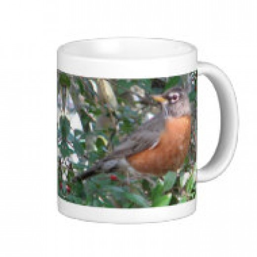 Here in South Louisiana, the robins spend the winter in our woods, eating berries from the various holly trees.